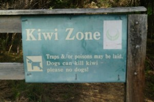 Apparently there may be kiwi around... not in the daytime though.